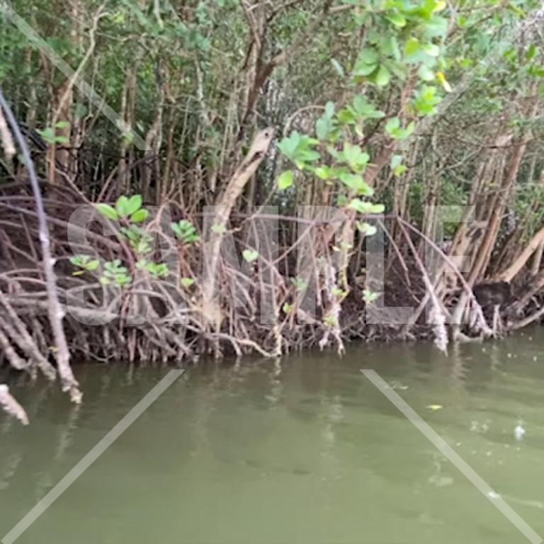 雨の中のタイのマングローブの木と赤船